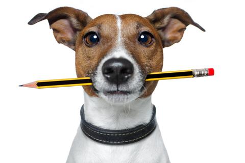 dog-pencil.jpg